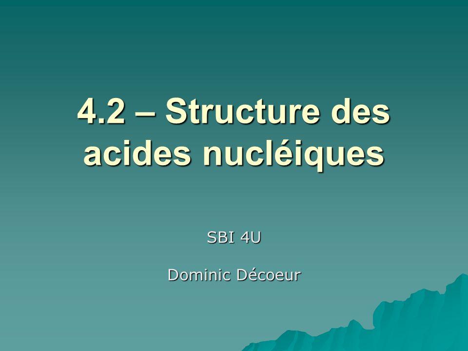 4.2 – Structure des acides nucléiques