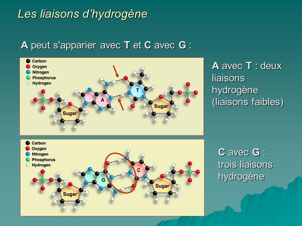 Les liaisons d'hydrogène