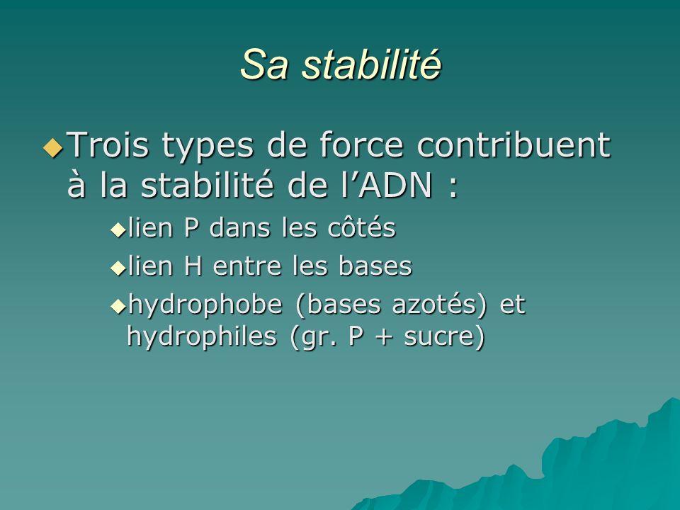 Sa stabilité Trois types de force contribuent à la stabilité de l'ADN : lien P dans les côtés. lien H entre les bases.