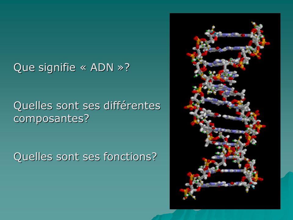 Que signifie « ADN » Quelles sont ses différentes composantes Quelles sont ses fonctions