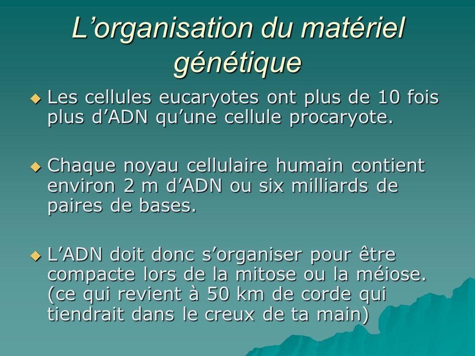 L'organisation du matériel génétique