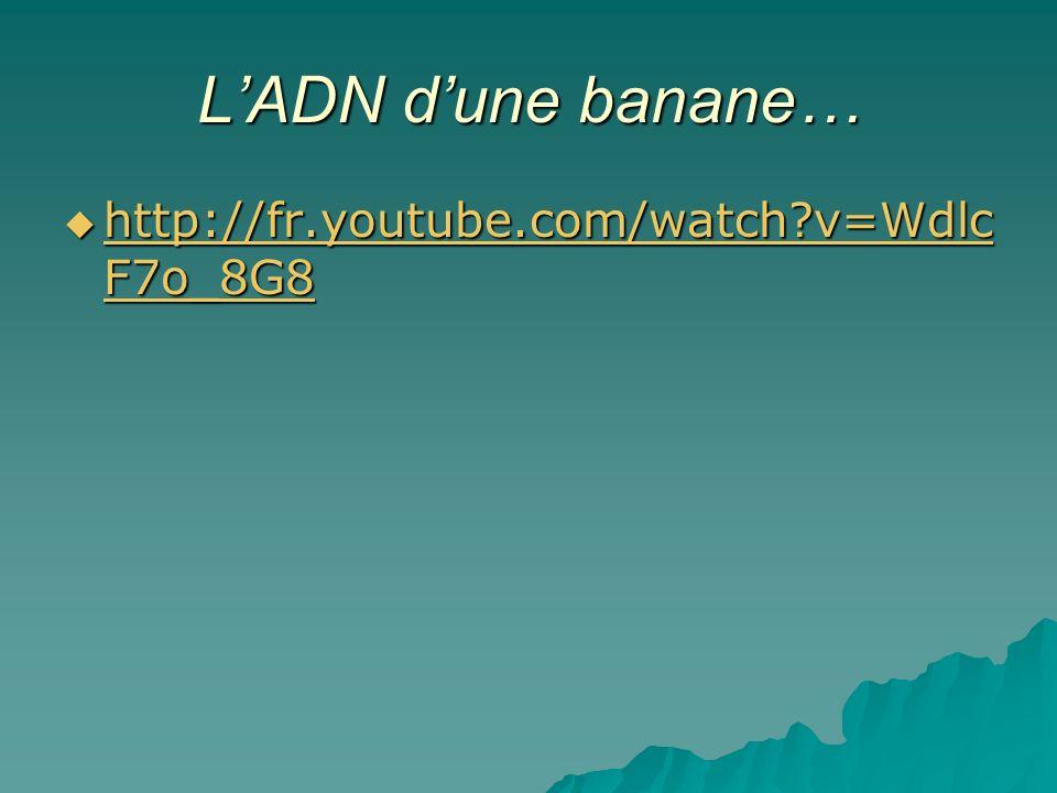 L'ADN d'une banane… http://fr.youtube.com/watch v=WdlcF7o_8G8