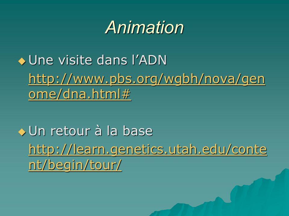 Animation Une visite dans l'ADN