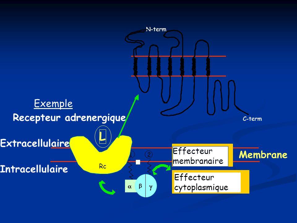 L Exemple Recepteur adrenergique Extracellulaire Membrane