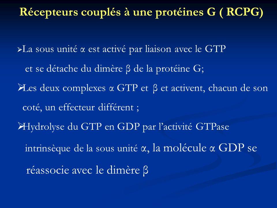 Récepteurs couplés à une protéines G ( RCPG)