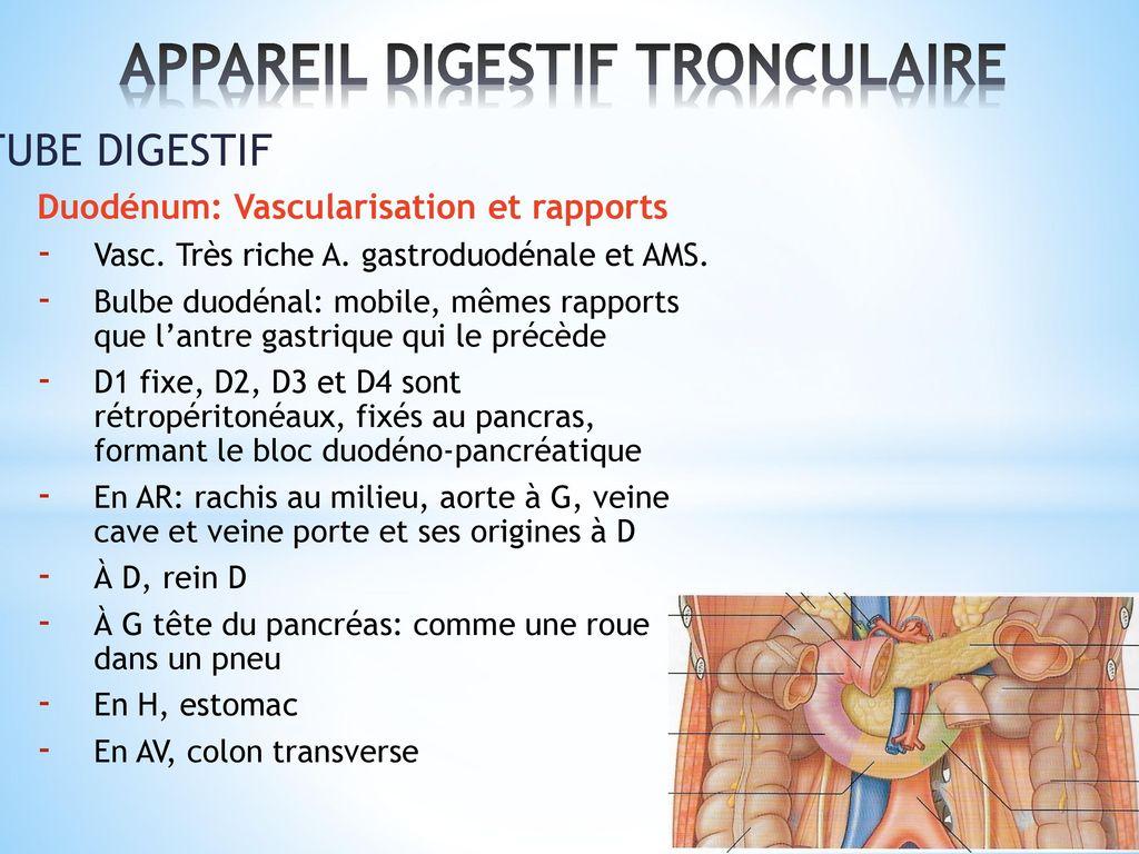 anatomie et physiologie du pancreas pdf