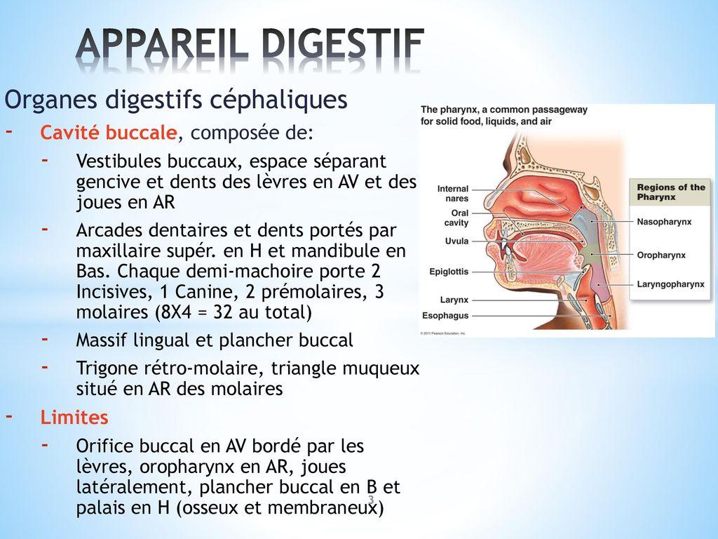 Großartig Clep Anatomie Und Physiologie Prüfung Galerie ...