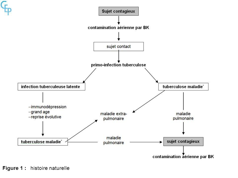Figure 1 : histoire naturelle