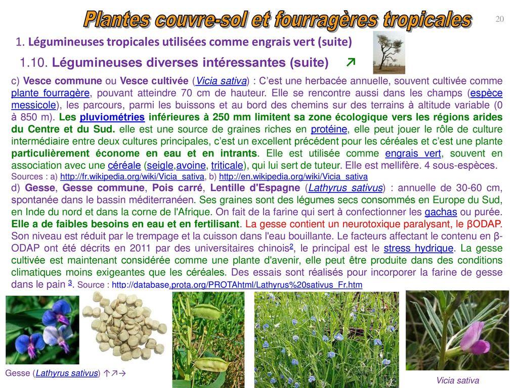 L gumineuses et gramin es couvre sol et fourrag res - Association plantes aromatiques entre elles ...