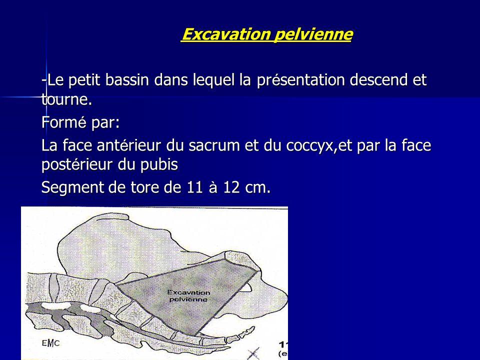 Excavation pelvienne -Le petit bassin dans lequel la présentation descend et tourne. Formé par: