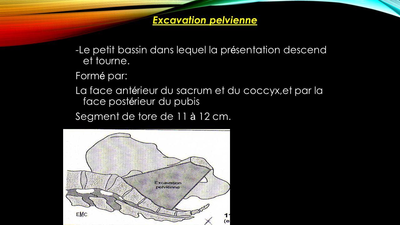 Excavation pelvienne -Le petit bassin dans lequel la présentation descend et tourne.