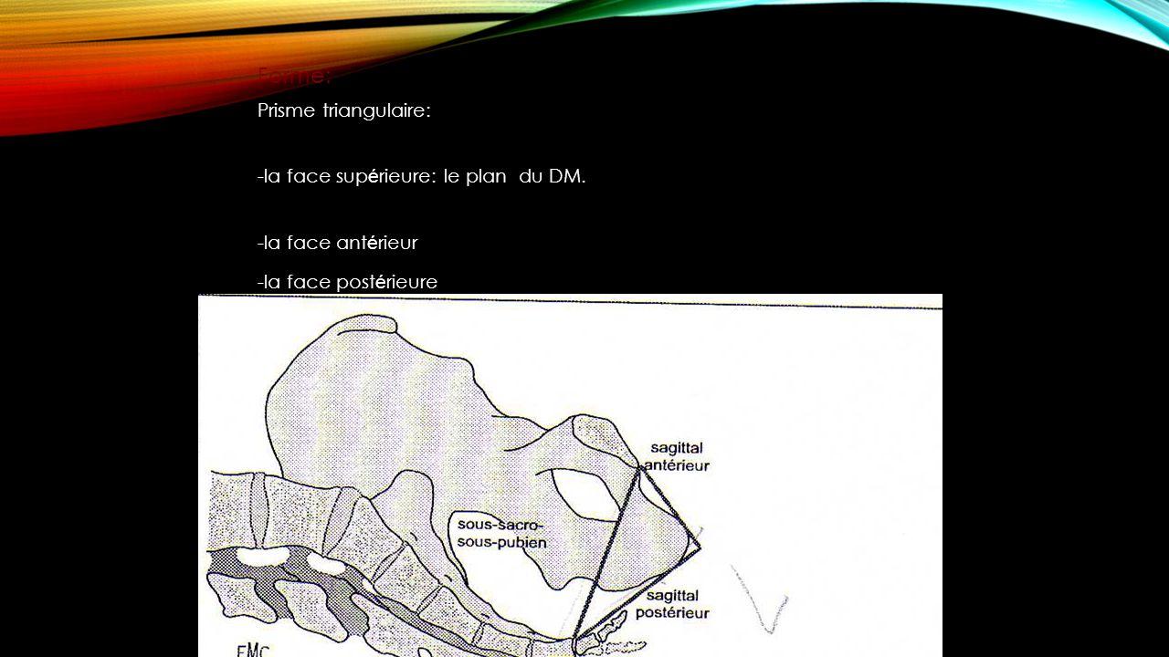 Forme: Prisme triangulaire: -la face supérieure: le plan du DM.