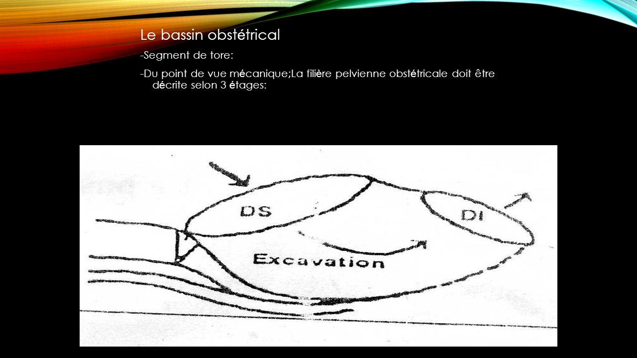 Le bassin obstétrical -Segment de tore:
