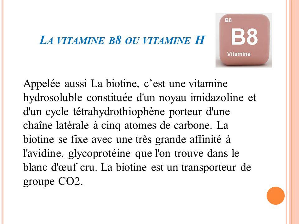 La vitamine b8 ou vitamine H