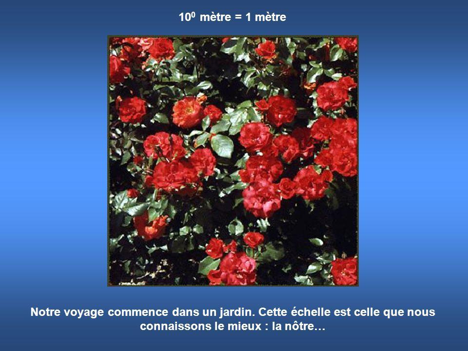 100 mètre = 1 mètre Notre voyage commence dans un jardin.