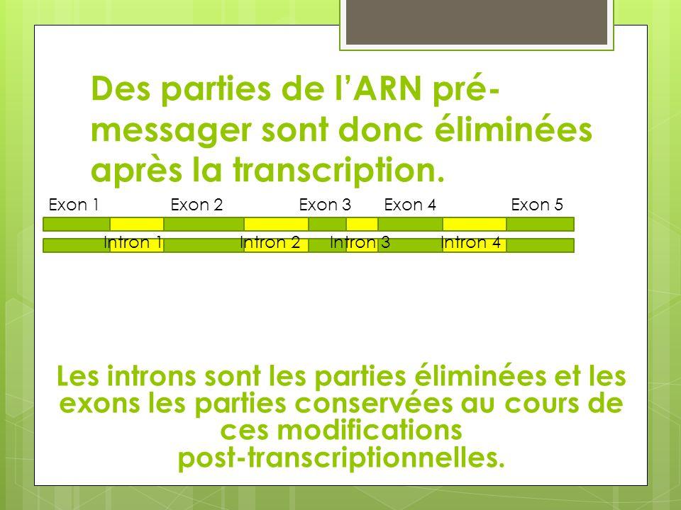 post-transcriptionnelles.
