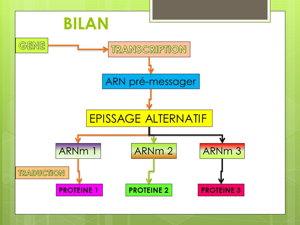 BILAN EPISSAGE ALTERNATIF GENE TRANSCRIPTION ARN pré-messager ARNm 1