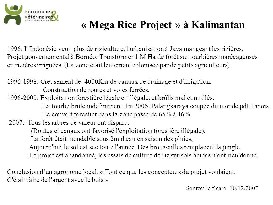« Mega Rice Project » à Kalimantan