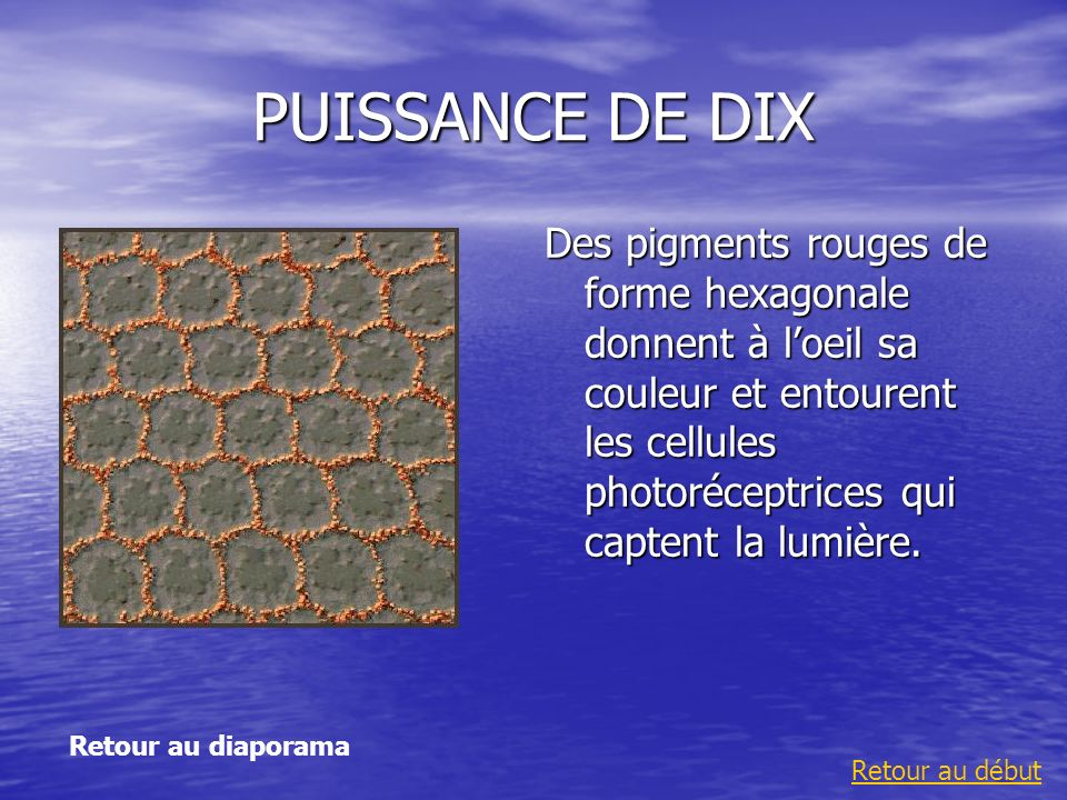 PUISSANCE DE DIX