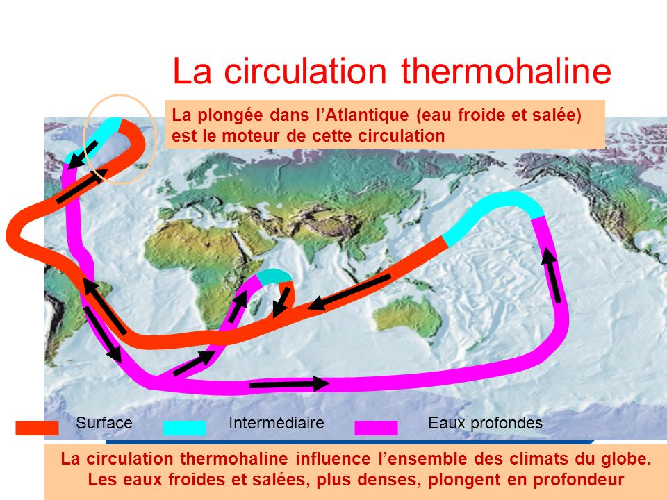 La circulation thermohaline