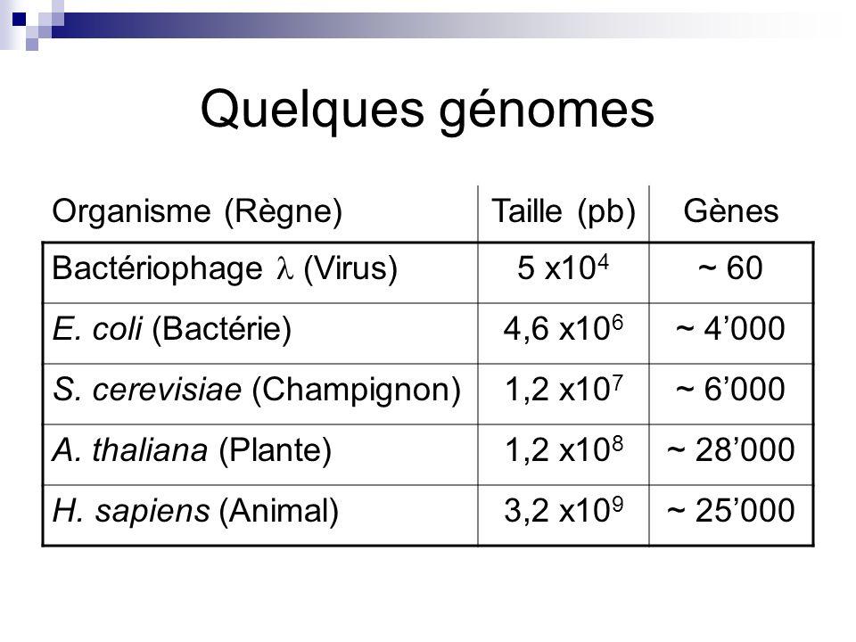Quelques génomes Organisme (Règne) Taille (pb) Gènes