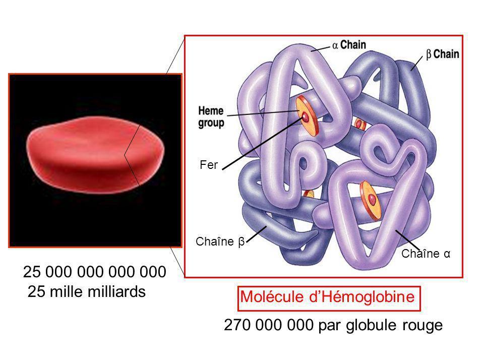 Molécule d'Hémoglobine