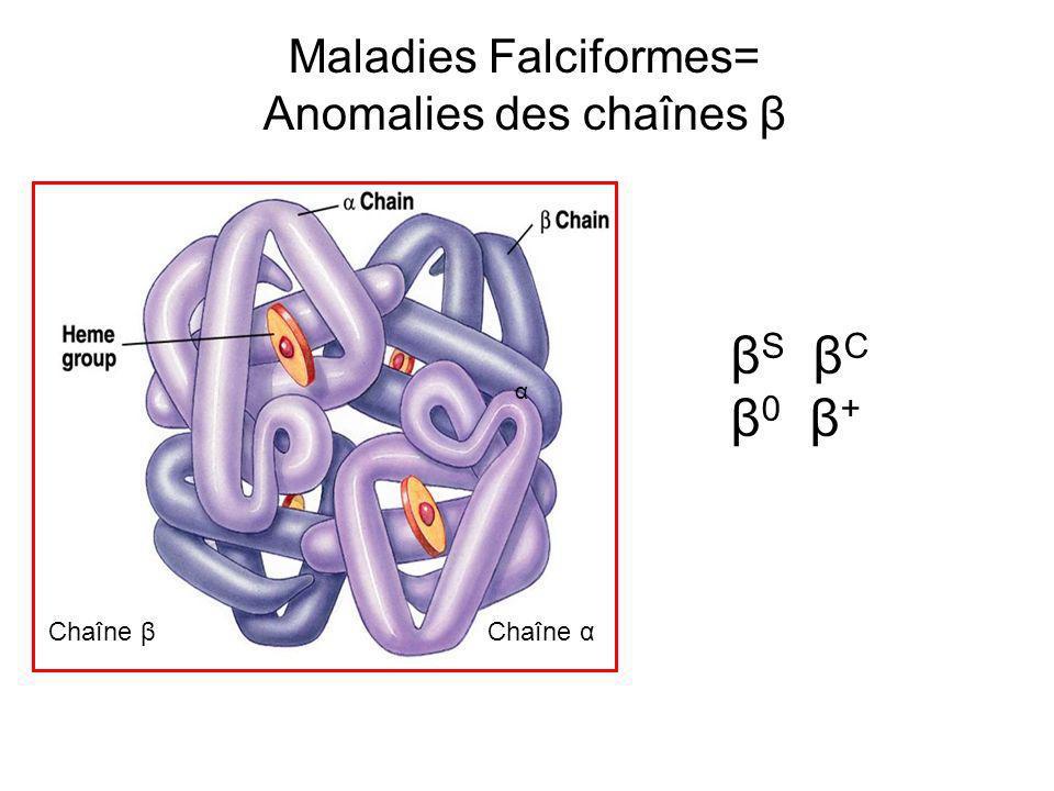 Maladies Falciformes= Anomalies des chaînes β