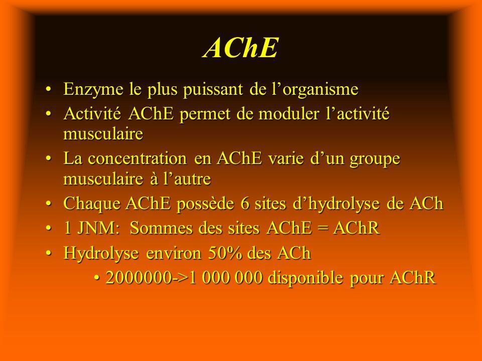 AChE Enzyme le plus puissant de l'organisme