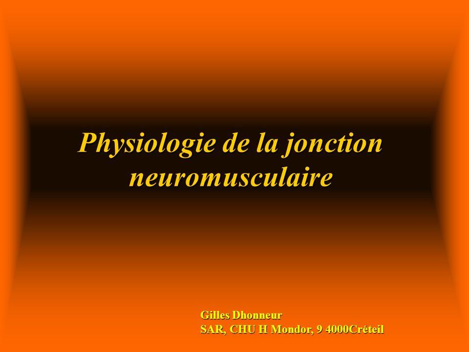 Physiologie de la jonction neuromusculaire