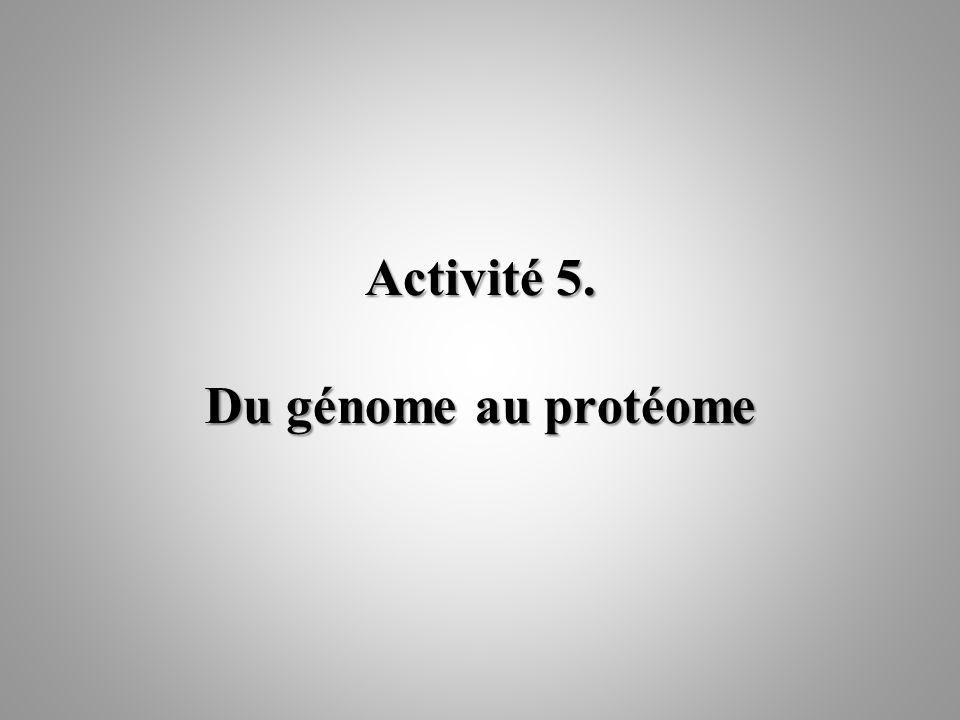 Activité 5. Du génome au protéome