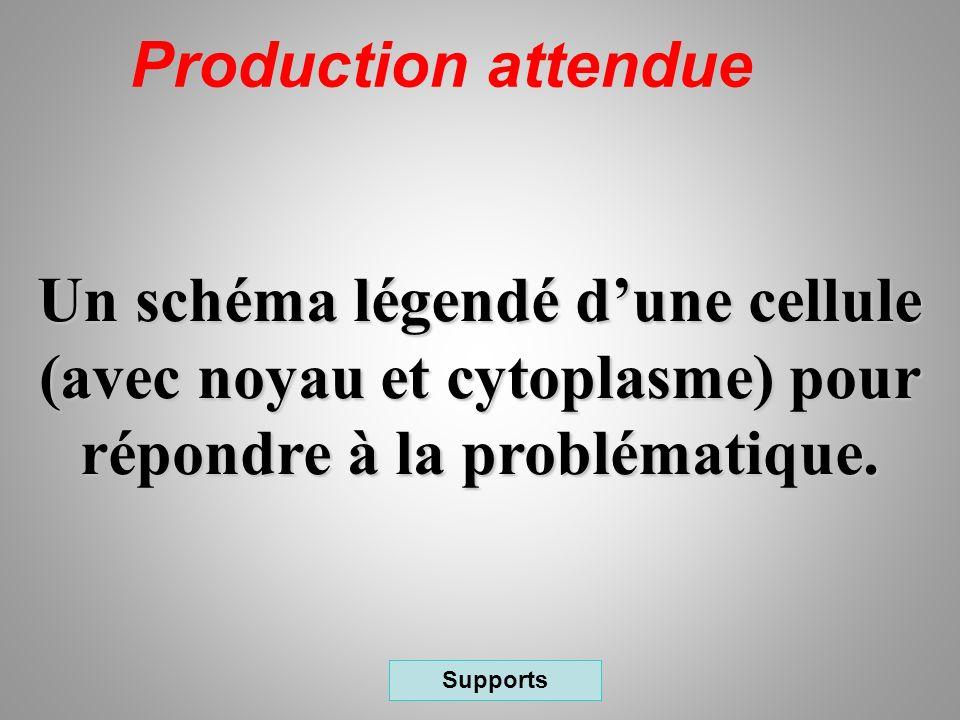 Production attendue Un schéma légendé d'une cellule (avec noyau et cytoplasme) pour répondre à la problématique.