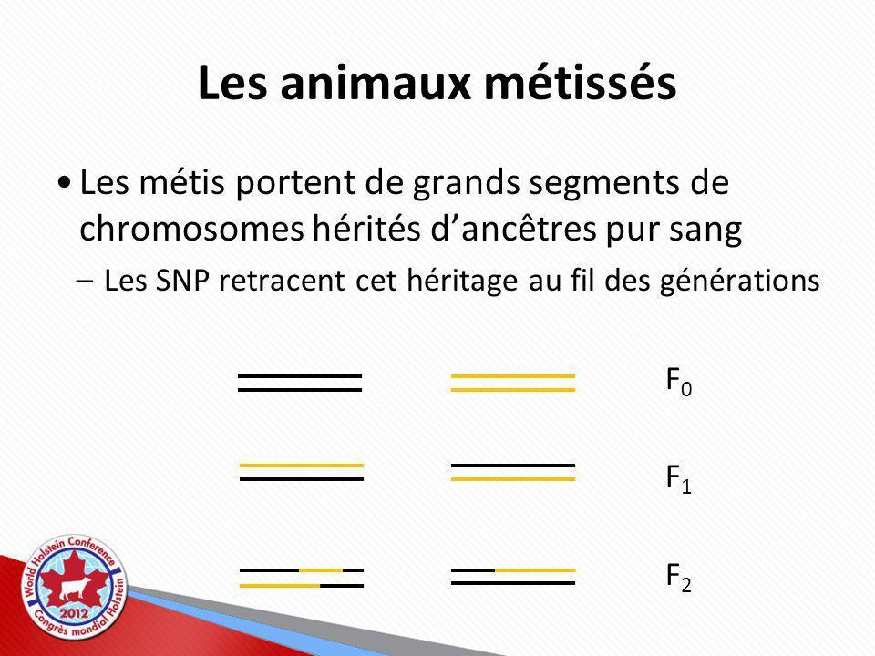 Les animaux métissés Les métis portent de grands segments de chromosomes hérités d'ancêtres pur sang.