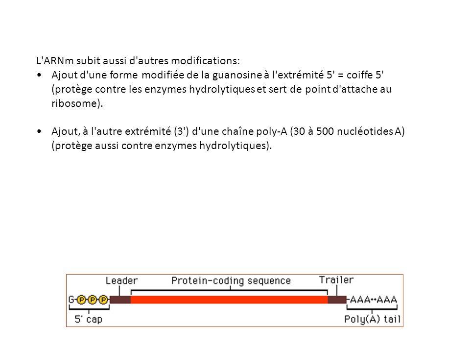 L ARNm subit aussi d autres modifications: