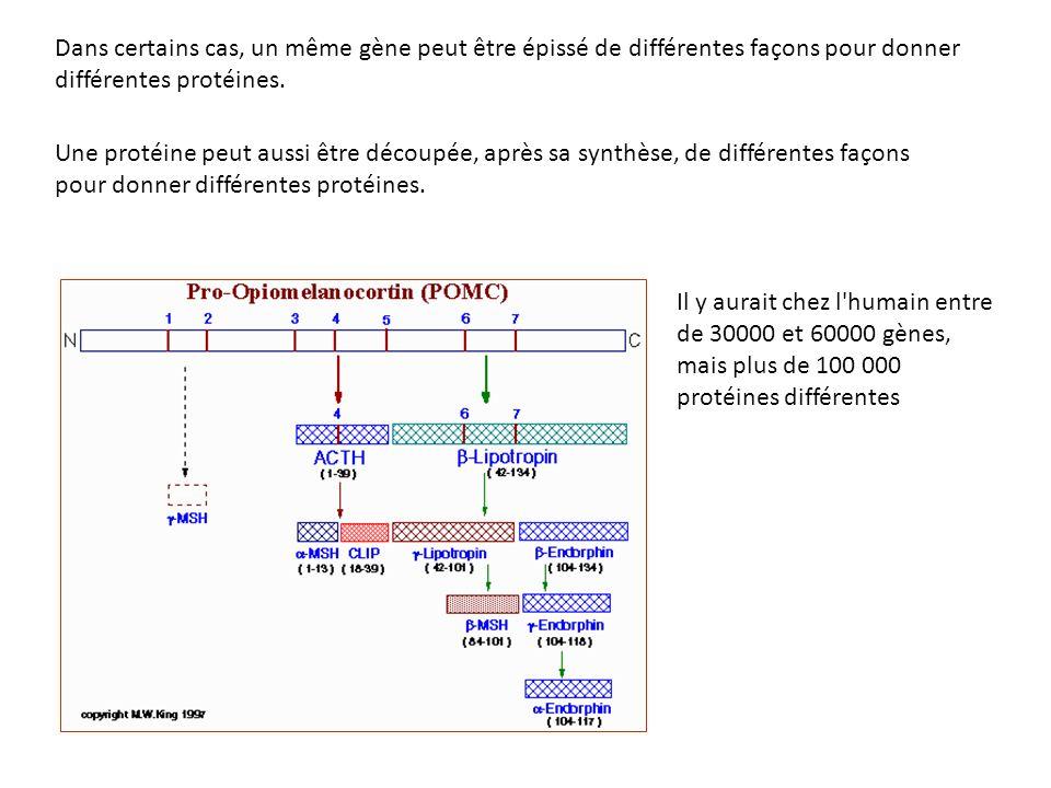 Dans certains cas, un même gène peut être épissé de différentes façons pour donner différentes protéines.