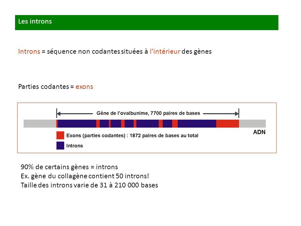 Les introns Introns = séquence non codantes situées à l intérieur des gènes. Parties codantes = exons.