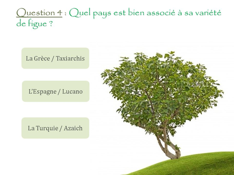 Question 4 : Quel pays est bien associé à sa variété de figue