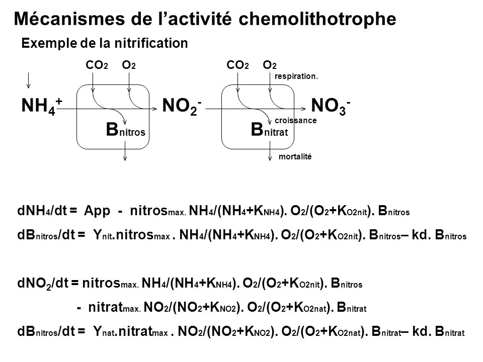 Mécanismes de l'activité chemolithotrophe
