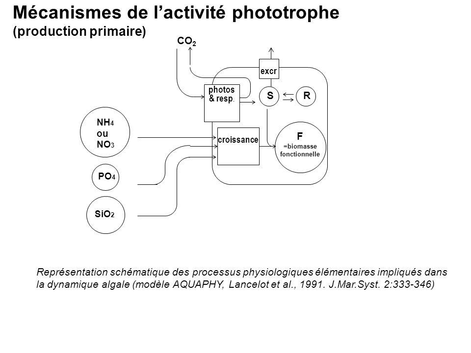 Mécanismes de l'activité phototrophe (production primaire)