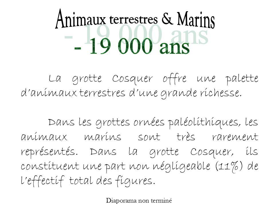 Animaux terrestres & Marins