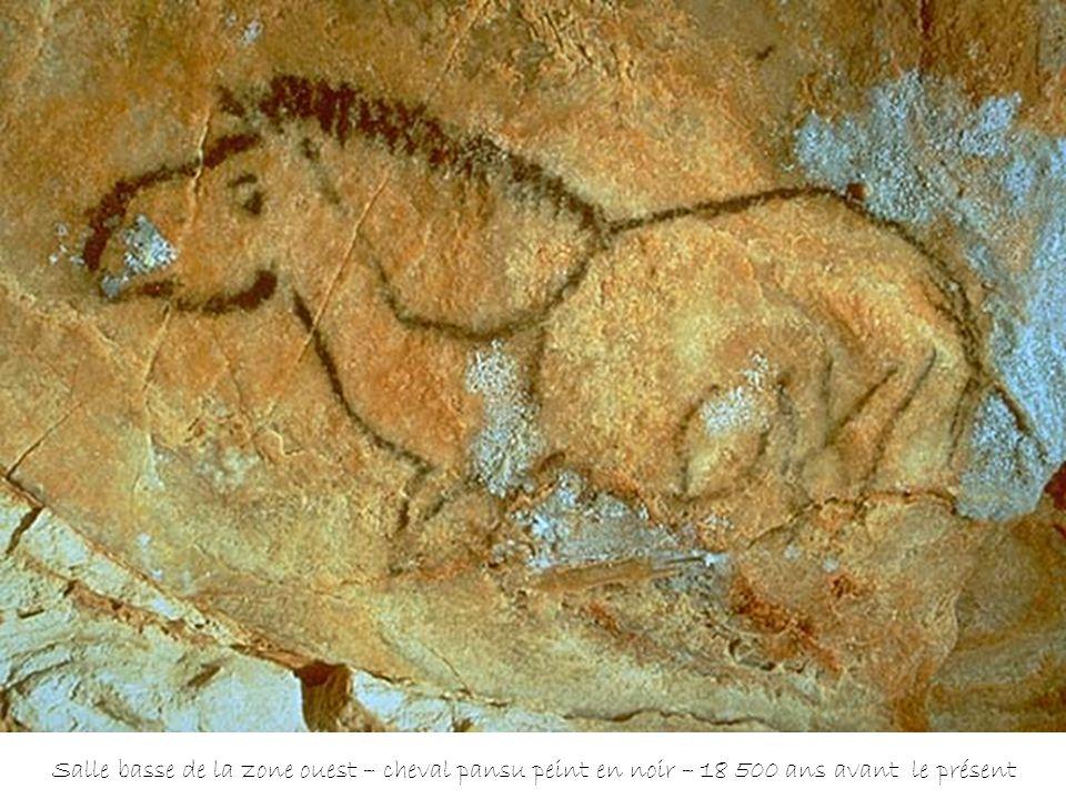 Salle basse de la zone ouest – cheval pansu peint en noir – 18 500 ans avant le présent