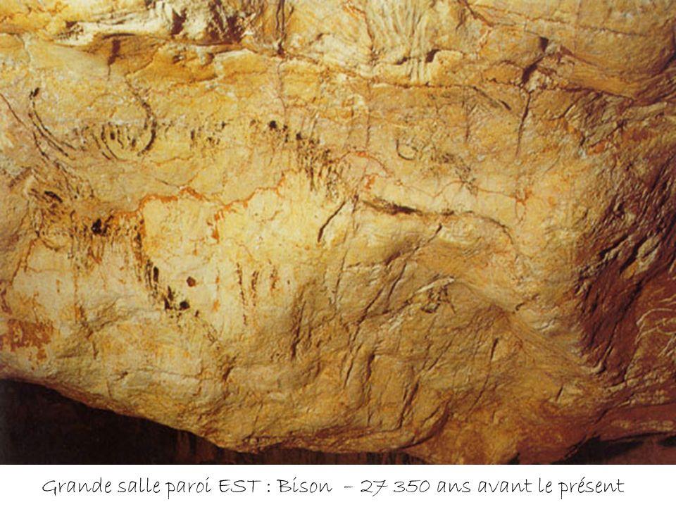 Grande salle paroi EST : Bison – 27 350 ans avant le présent