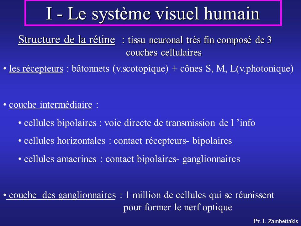I - Le système visuel humain