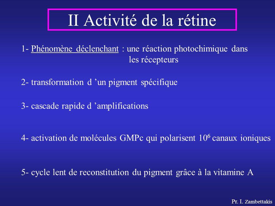 II Activité de la rétine