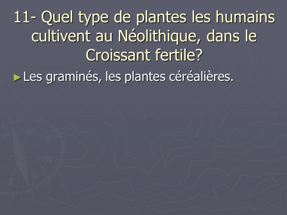 11- Quel type de plantes les humains cultivent au Néolithique, dans le Croissant fertile