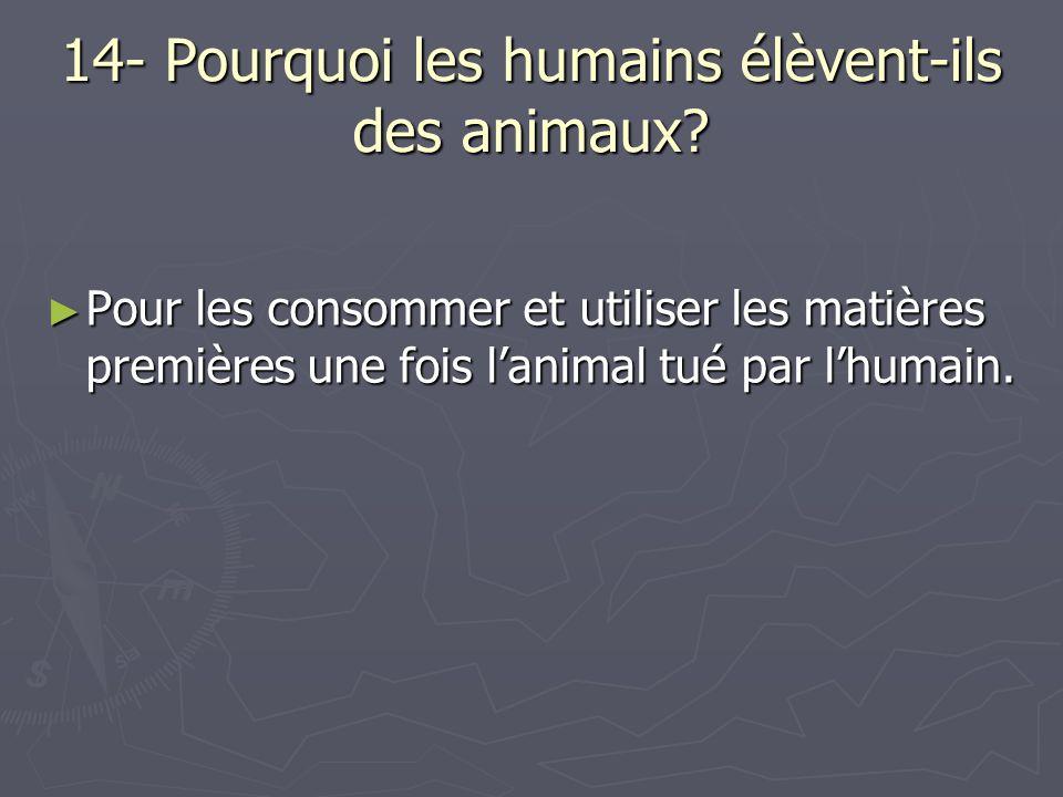 14- Pourquoi les humains élèvent-ils des animaux