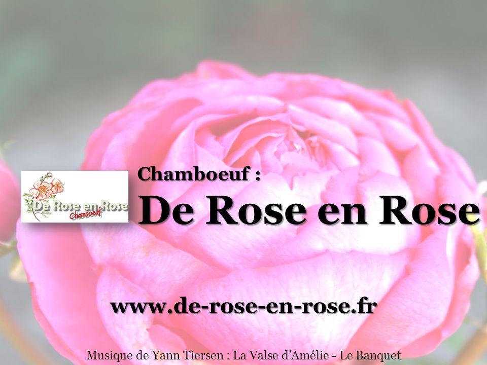 Musique de Yann Tiersen : La Valse d'Amélie - Le Banquet