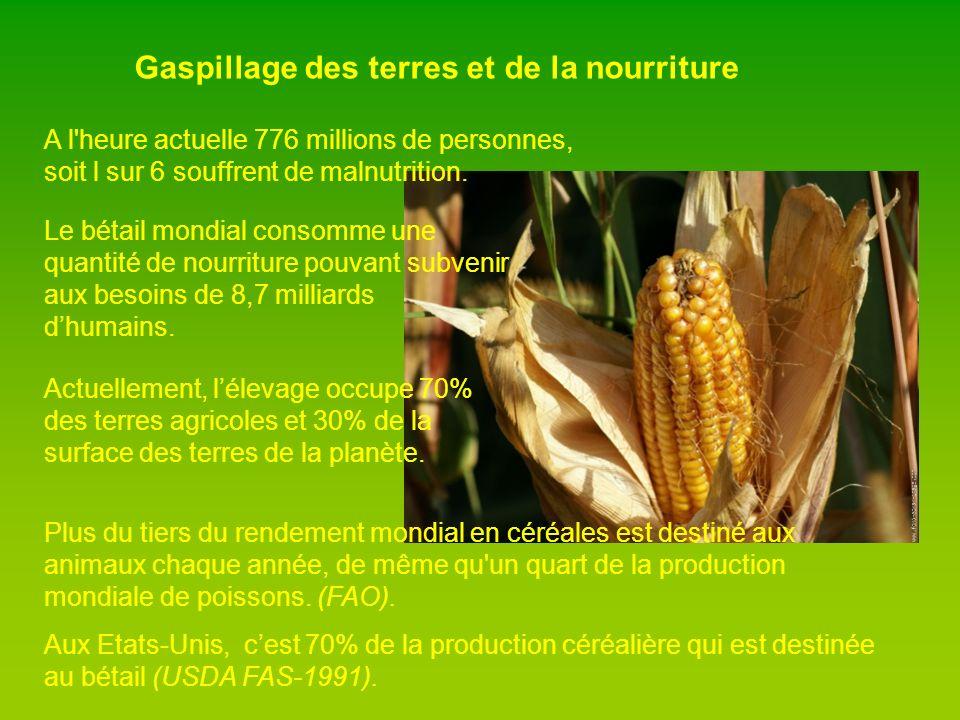 Gaspillage des terres et de la nourriture