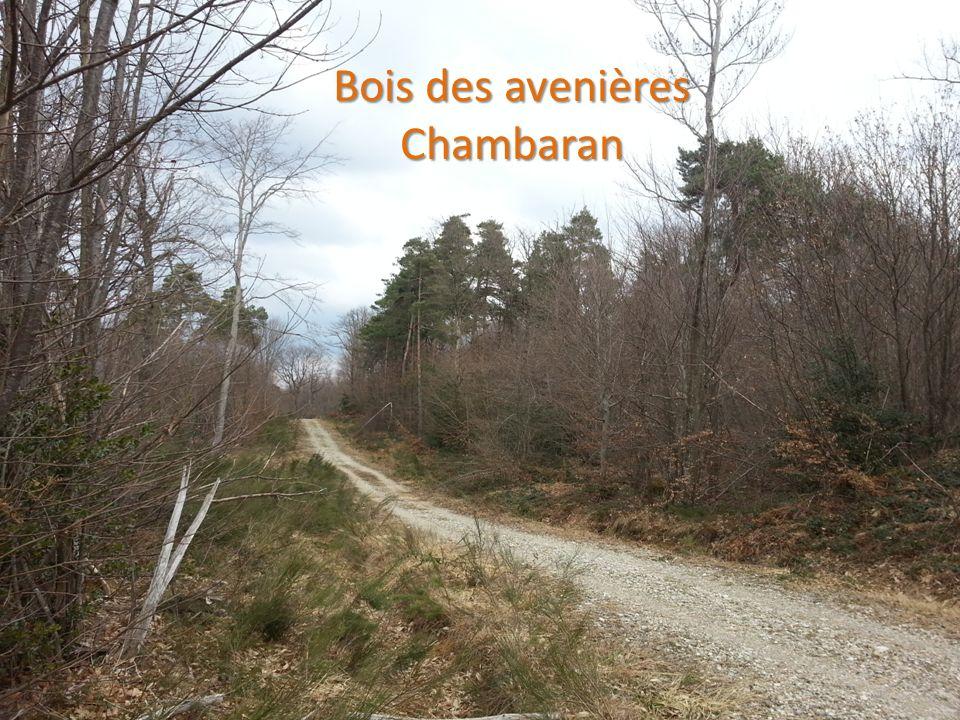 Bois des avenières Bois des avenières Chambaran Chambaran