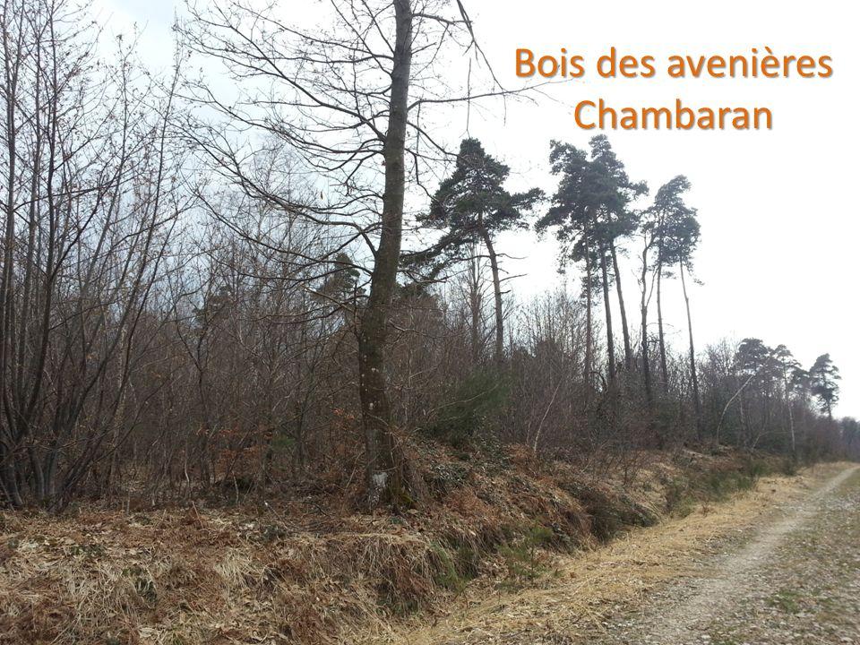 Bois des avenières Chambaran Bois des avenières Chambaran