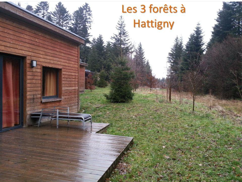 Les 3 forêts à Hattigny ENVIRONNEMENT LA FORET